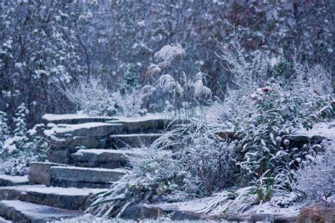 landscaping in winter winter garden 8