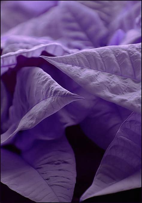 In Purple Mood By Grandmas On Deviantart