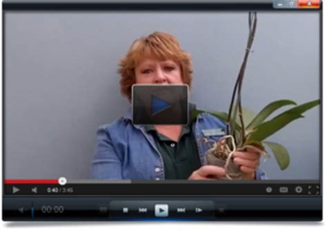 caring for orchids indoors after bloom how to care for orchids free orchid tips secrets by orchidsmadeeasy com