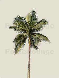 Bilder Von Palmen : palmen bilder ab 7 90 online bestellen gratisversand posterlounge ~ Frokenaadalensverden.com Haus und Dekorationen