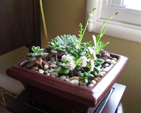indoor cactus garden ideas www pixshark images