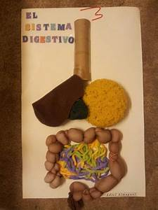 Digestive System Craft Idea  My Kid Science Project