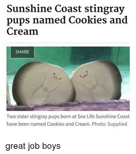 Stingray Meme - sunshine coast stingray pups named cookies and cream share two sister stingray pups born at sea