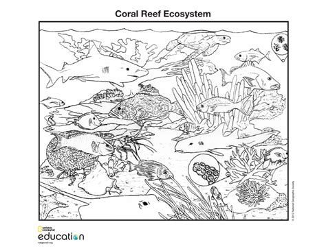 coral reef coloring pages    print