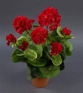 Orchideen Ohne Topf : geranie 36cm rot ohne topf lm kunstpflanzen k nstliche blumen pflanzen kunstblumen geranie ~ Eleganceandgraceweddings.com Haus und Dekorationen