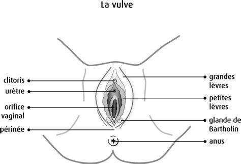 anatomie et physiologie de la vulve soci 233 t 233 canadienne du cancer