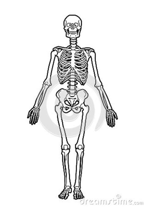Esqueleto Humano Para Colorear Y Sus Partes En Espanol