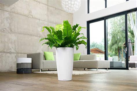 grosse pflanzen schnell entstauben bild  schoener wohnen