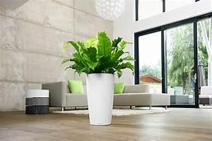 Badezimmer Pflanzen Ohne Fenster : gro e pflanzen schnell entstauben bild 4 sch ner wohnen ~ Bigdaddyawards.com Haus und Dekorationen