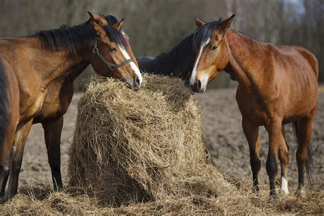 diet forage nutrition horse istock hygain series horses pony horseandponymag