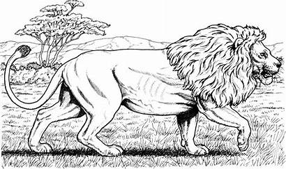 Lion Coloring Pages Lions African Cat Printable