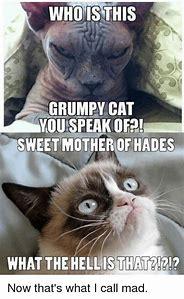 Evil Grumpy Cat Memes