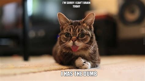 Lil Bub Meme - lil bub cannot brain today he currently has dumbness by christopherlutz9564 meme center