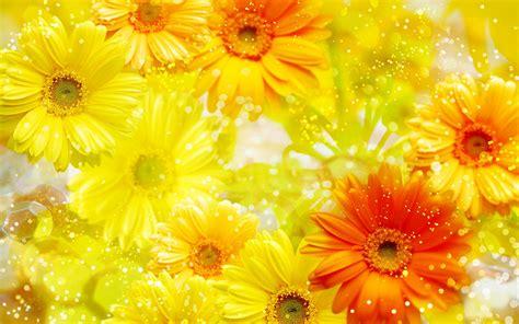 yellow flower wallpaper hd  wallpaperscom
