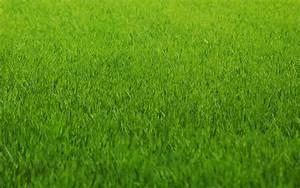 green grass, background, texture, download photo, green ...