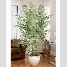 High Quality Large 9' Butterfly Silk Palm Tree At Petals