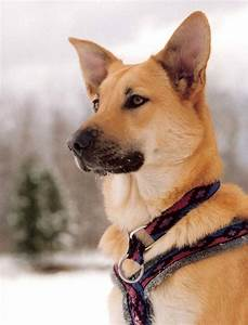 1062 best images about Dog Breeds on Pinterest | Chow chow ...