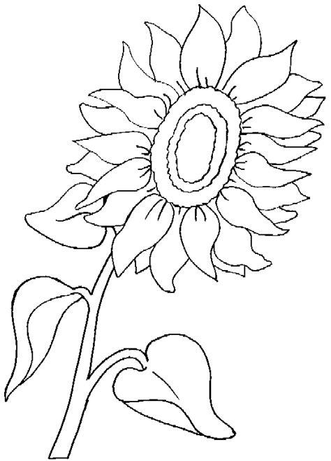 pc web public photo album drawing  coloring pictures