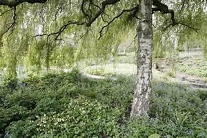 Bäume Für Trockenen Boden : b ume unterpflanzen mein sch ner garten ~ Lizthompson.info Haus und Dekorationen