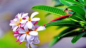 Hd Nature Amazing Natural Flowers Landscape Widescreen ...