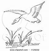 Duck Pond Flying Coloring Cattails Cartoon Clipart Vector Outlined Picsburg Clip Bird Cartoons Quick Arts sketch template