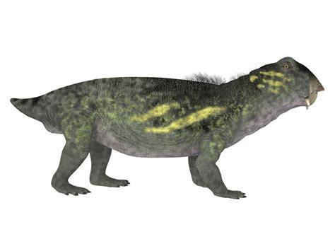 Lystrosaurus Dinosaur Side Profile Poster Print By Corey