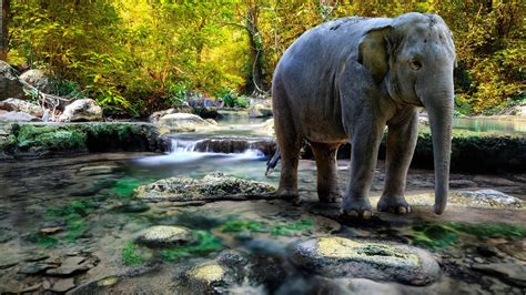 Elephants, River, Nature, Animals Wallpapers Hd / Desktop
