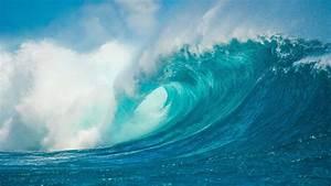 Ocean Habitat  Sea