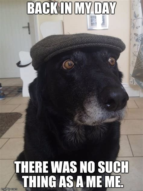 Such Dog Meme - back in my day dog imgflip