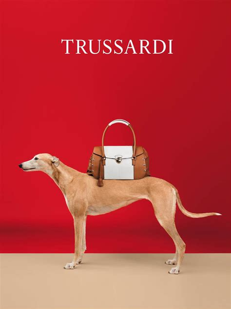 million dollar story  trussardi greyhounds