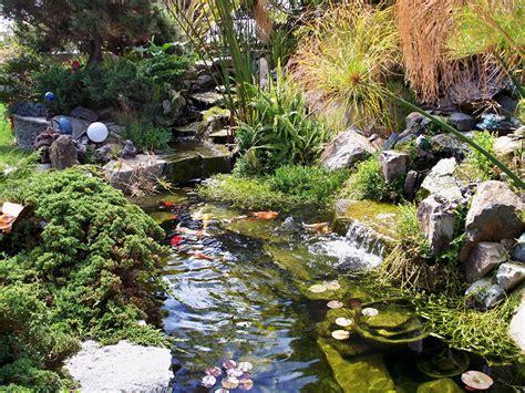 fotos water natur teich garten
