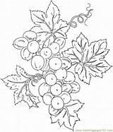 Colorat Uva Struguri Supercoloring Fructe Weintrauben Uvas Raisin Frutas Planse Disegni Vigne Grappolo Frucht Trauben Toamna 도안 Ausmalbilder Cacho Ausmalbild sketch template