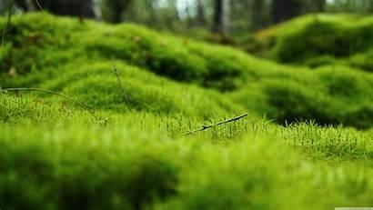 Moss Desktop 4k Ultra Wallpapers Uhd Grass