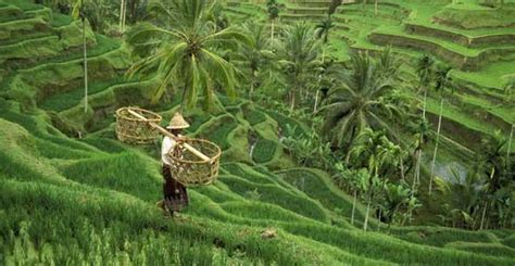 Images Of Beach Sand Jatiluwih Rice Terrace The Breathtaking Scenery You Won 39 T Regret To See