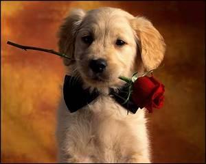 Cute Dogs Wallpapers Hd Rocks Wallpaper Vodafone Dog ...