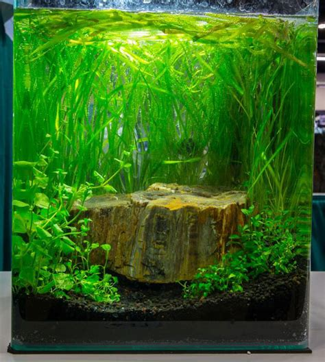 Small Tank Aquascaping by Aquascaping Live Contest Returns To Aquatic Experience