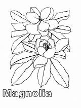 Magnolia Coloring Tree Flower Flowers Template Printable Recommended Colors Mycoloring sketch template