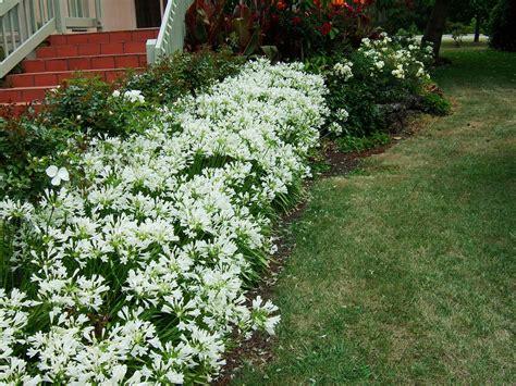Prãªter Jardin by Jardim Da Terra Como Cultivar Agapantos