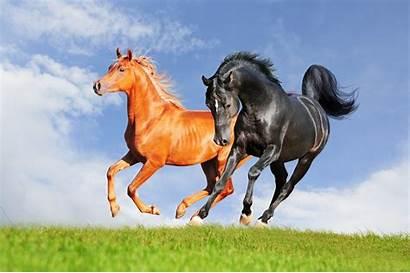 Horse Nature Animals Desktop Wallpapers Animal Backgrounds