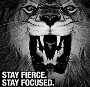 Lions Don't Lose Sleep on Pinterest   Lion Quotes, Lion ...