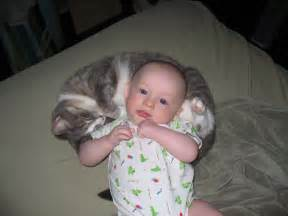 cats and newborns exclusively cats veterinary hospital hello baby