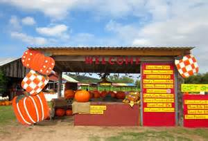 Marble Falls Pumpkin Patch by Pumpkins At Sweet Berry Farm Way Out West Austin