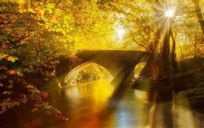 Forest Golden Bridge Stone Nature Wallpapers Sun