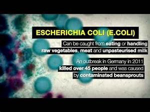 Bacteria on your hands -- importance of hand washing ...