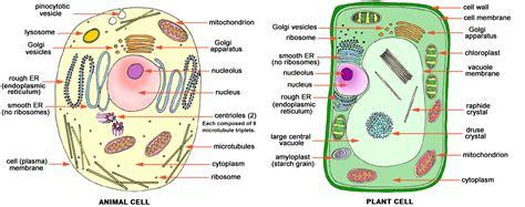 cells biochemth