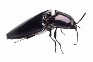 Kleine Schwarze Käfer Im Keller : kleine krabbeltiere in der wohnung loswerden ~ Lizthompson.info Haus und Dekorationen