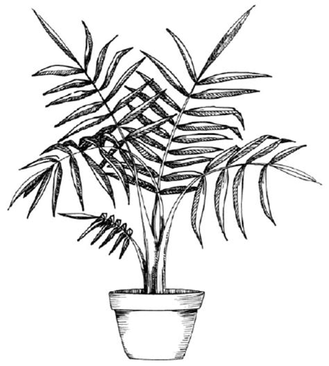 shading   draw  palm howstuffworks