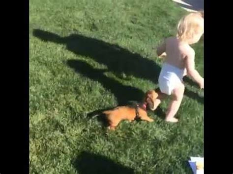 dog pulls  toddlers diaper youtube