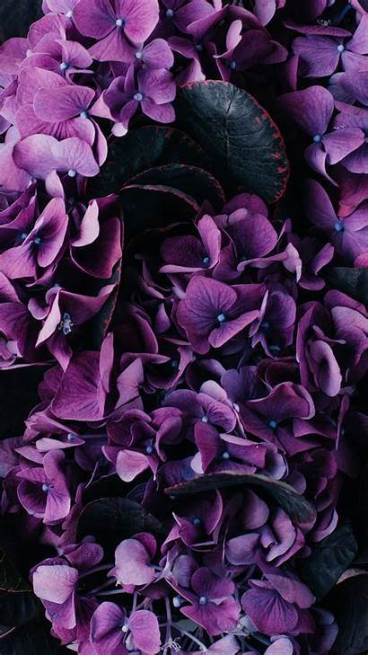 Iphone Floral Flowers Wallpapers Purple Flower Backgrounds
