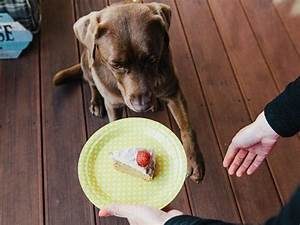 Hundekuchen Selber Backen : diy anleitung geburtstagskuchen f r hunde selber backen via kochen pinterest ~ Frokenaadalensverden.com Haus und Dekorationen